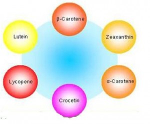 The rest of the Lutein Family