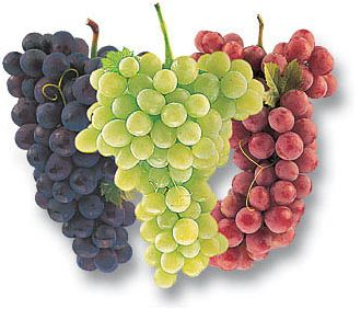 Grapes And Resveratrol Facts And Myths Health Reviewer