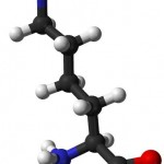 Lysine Benefits