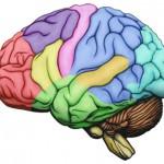 polyphenol rich brain